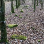 Stenrækken i Nørreskoven